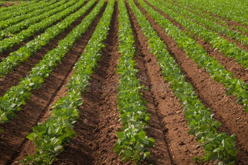 rolniczy upraw ziemi rząd fotografia royalty free