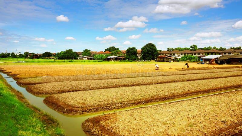 Rolniczych użyźniaczy flancowania organicznie jarzynowy krajobraz obrazy stock