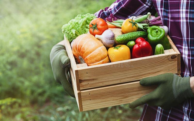 Rolników chwyty w jego rękach drewniany pudełko z warzywa produkuje na tle ogród ?wie?y i ?ywno?ci organiczna zdjęcia stock