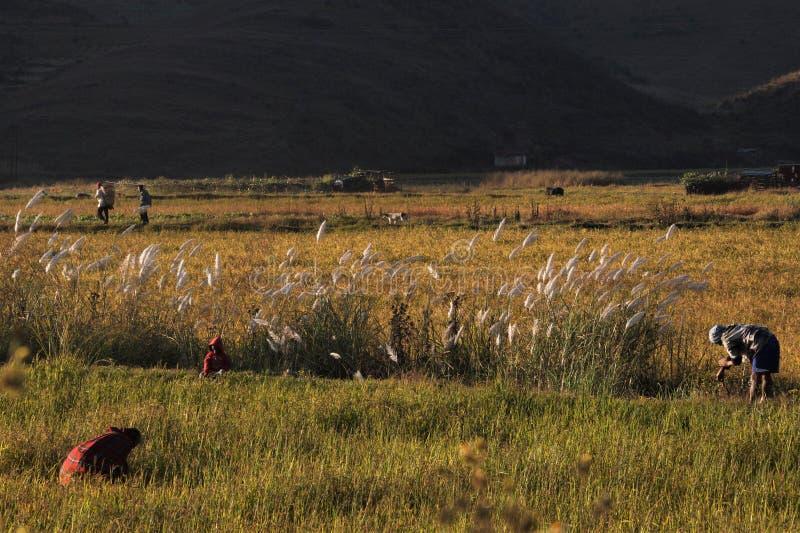 rolników uprawiać ziemię zdjęcie royalty free