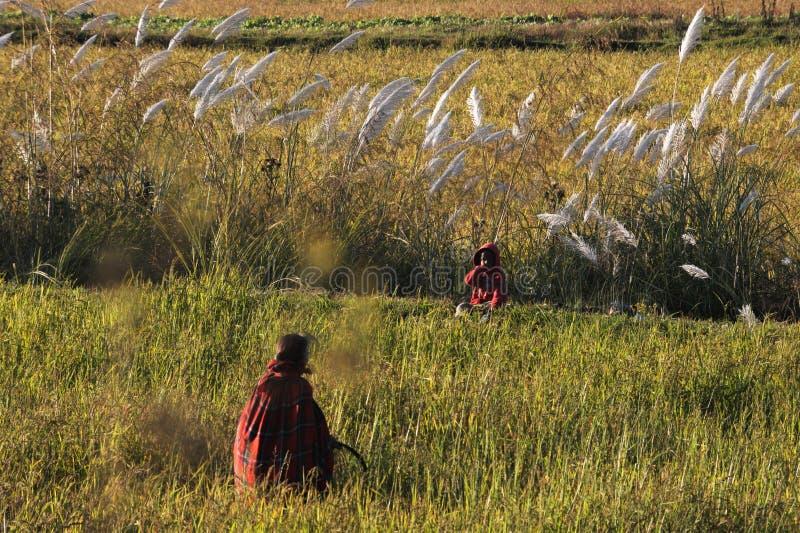 rolników uprawiać ziemię zdjęcie stock