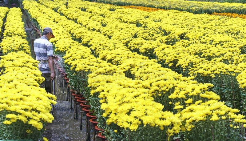 Rolnik dba dla stokrotka kwiatu ogródu hydroponic obrazy stock