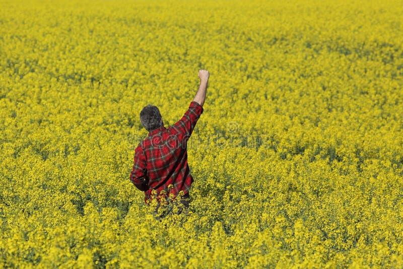 Rolnik egzamininuje kwitnący rapeseed gestykulować i pole fotografia stock