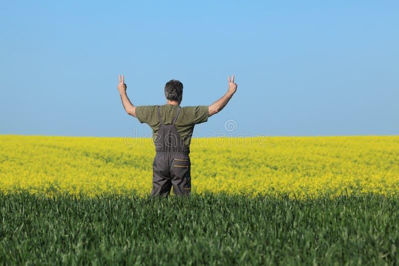 Rolnik egzamininuje kwitnący rapeseed, pszenicznego pole i gesturi obraz royalty free