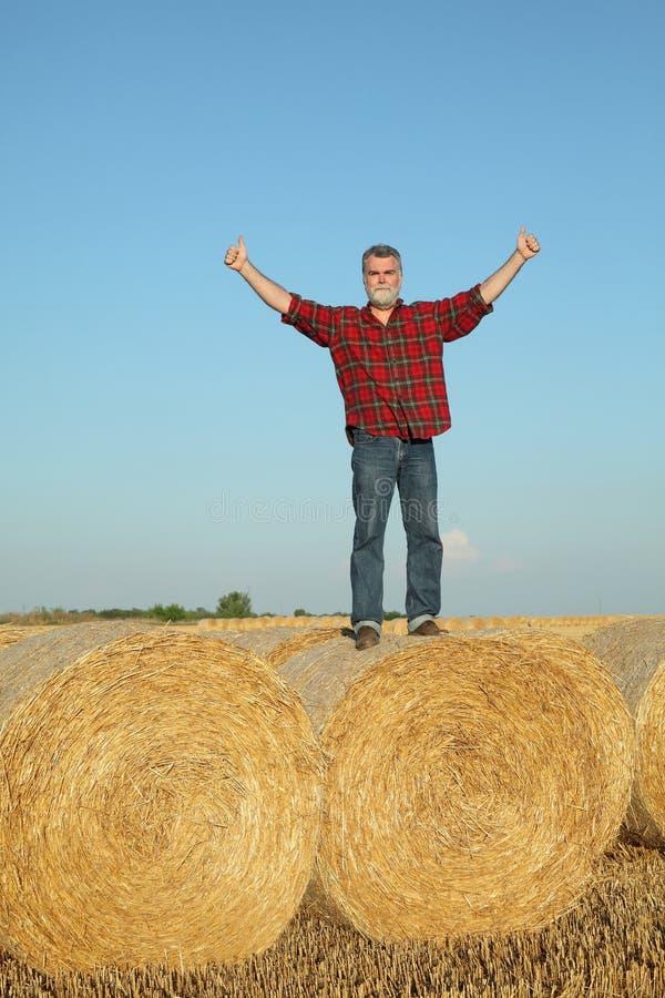 Rolnik egzamininuje pszenicznego pole po żniwa i gestykulować obrazy royalty free