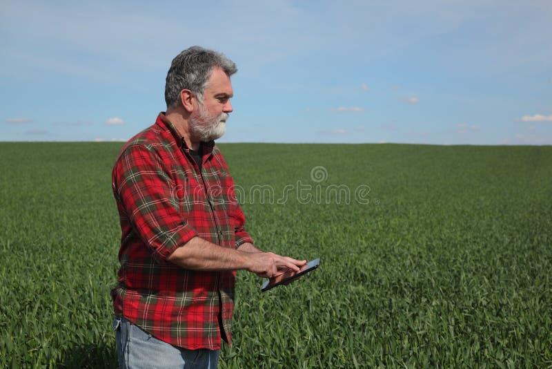 Rolnik egzamininuje pszenicznego pole w wio?nie obraz royalty free