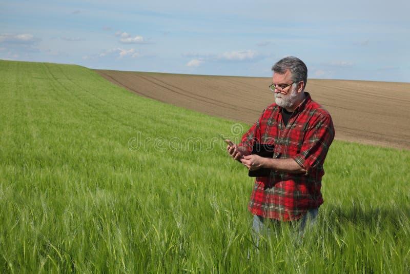 Rolnik egzamininuje pszenicznego pole w wio?nie zdjęcie royalty free