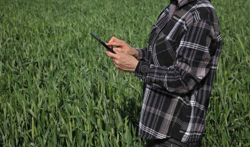 Rolnik egzamininuje pszenicznego pole w wio?nie obraz stock