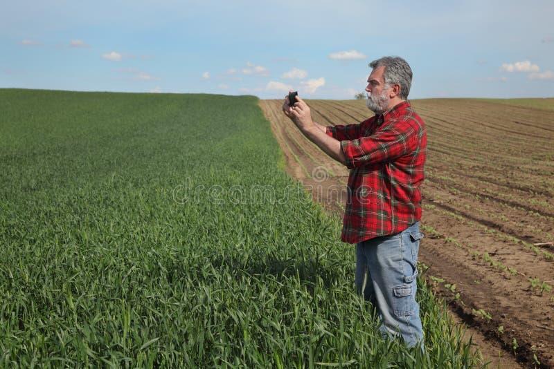 Rolnik egzamininuje pszenicznego pole w wio?nie zdjęcia stock