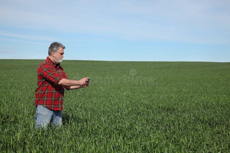 Rolnik egzamininuje pszenicznego pole w wio?nie obrazy royalty free