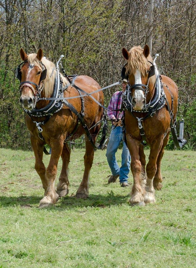 Rolnik i drużyna pługów konie zdjęcia royalty free