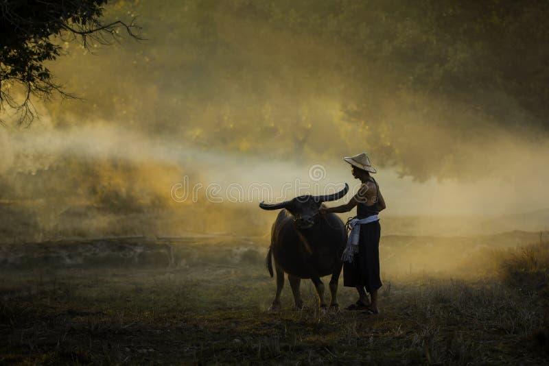 Rolnik i jego bizon w wieczór obraz stock