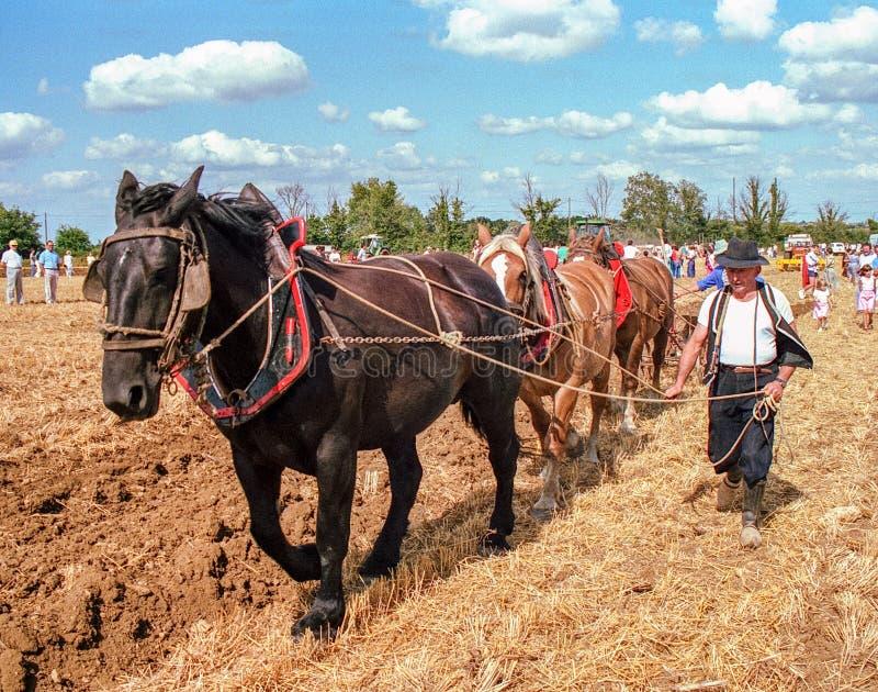 Rolnik i konie Przeorze pole w Francja obraz stock