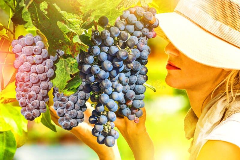 Rolnik kontroluje czerwonego winogrona zdjęcie royalty free