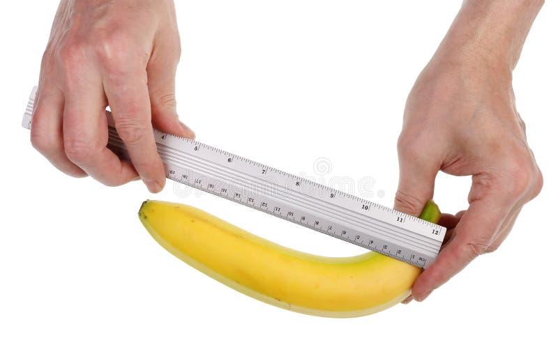 Rolnik kontroluje wielkość i jakość dojrzałych owoców bananowych za pomocą wyizolowanego makra fotografia stock