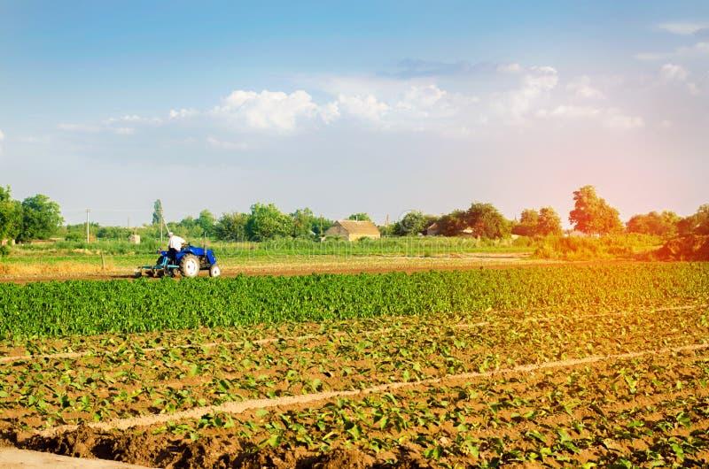Rolnik kultywuje pole z ciągnikiem Rolnictwo, warzywa, organicznie produkty rolni, przemysł farmlands zdjęcia stock