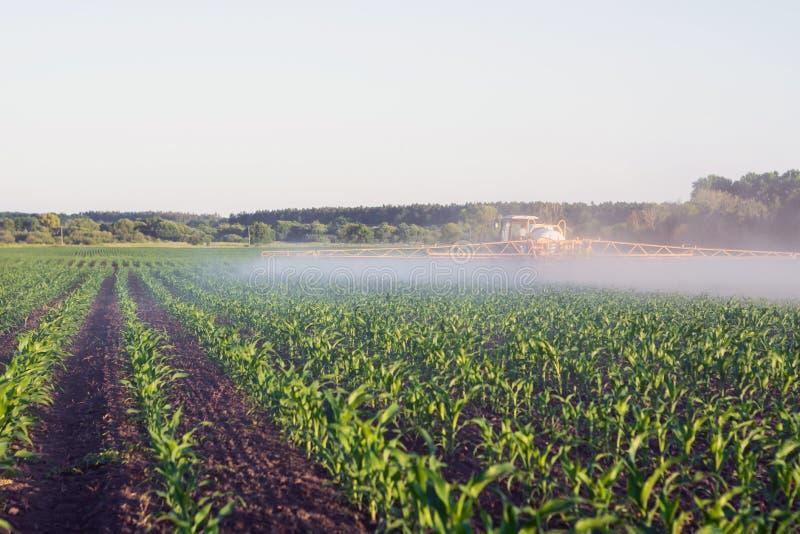 Rolnik na ciągniętej natryskownicie przedstawia microfertilizer na młodym kukurydzanym polu zdjęcia royalty free