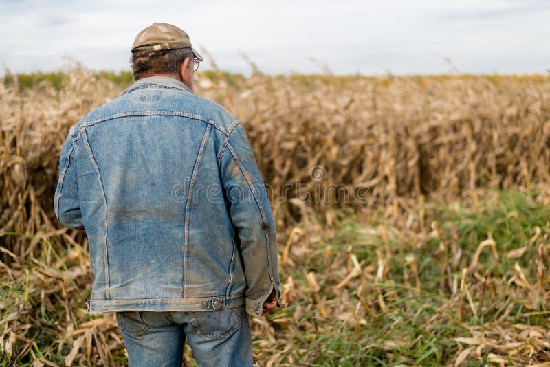 Rolnik na polu, kukurudza zdjęcie stock