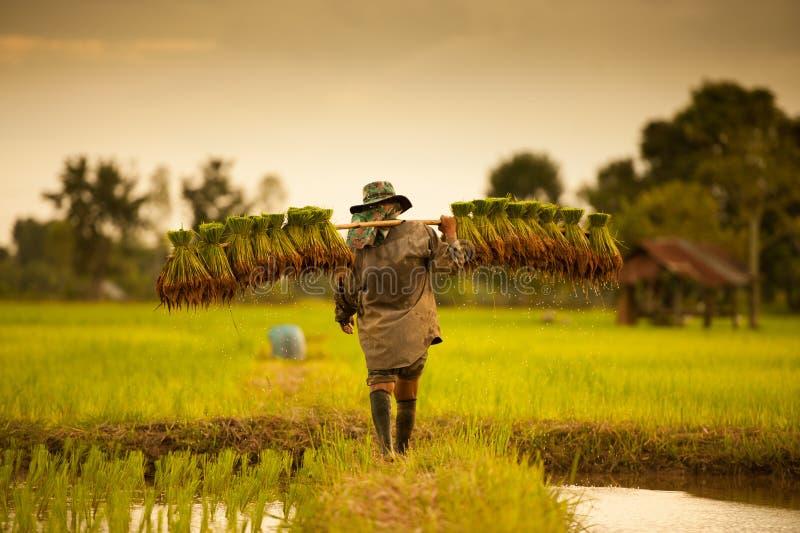 Rolnik na zielonych polach zdjęcia stock