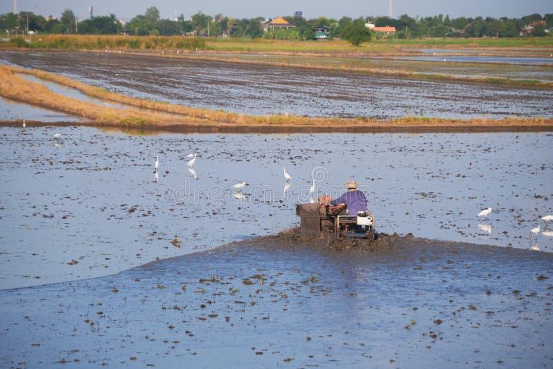 Rolnik orki grabie na polach ryżowych z wodą i błotem obrazy stock
