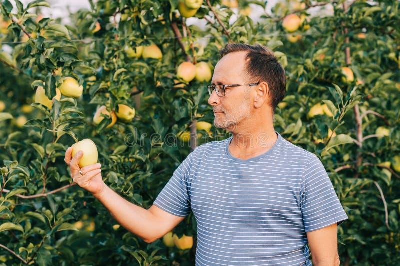 Rolnik pozujący się sadu jabłkowego obraz royalty free