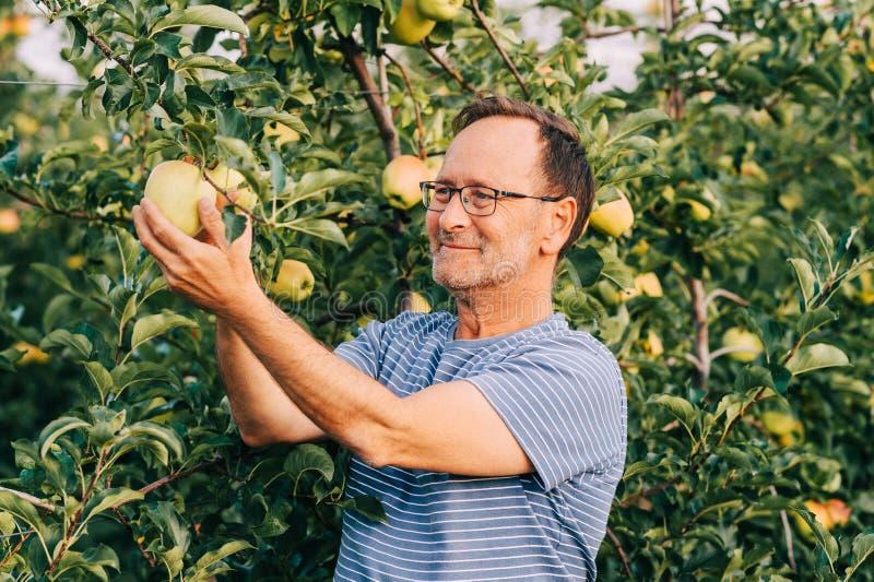 Rolnik pozujący się sadu jabłkowego fotografia royalty free