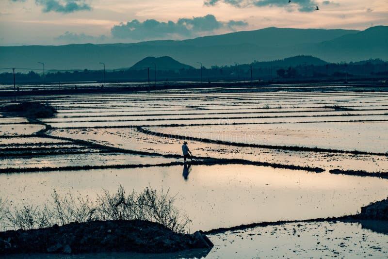 Rolnik przeorze jego pole w Vietnam zdjęcie royalty free