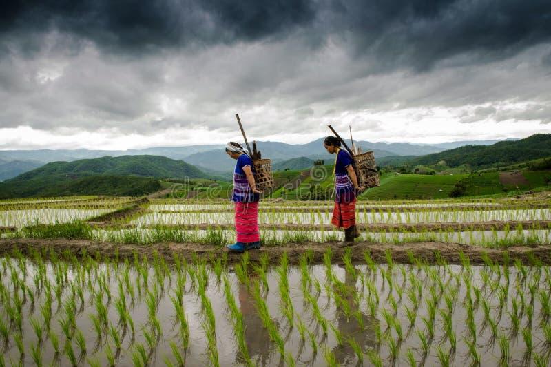 Download Rolnik Przy Ryżowymi Tarasów Papongpians Maechaen Chiangmai Thailand Zdjęcie Editorial - Obraz złożonej z tarasy, ludzie: 57655441