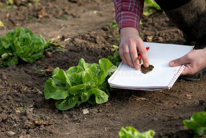 Rolnik sprawdza produkty w ogródzie obraz royalty free