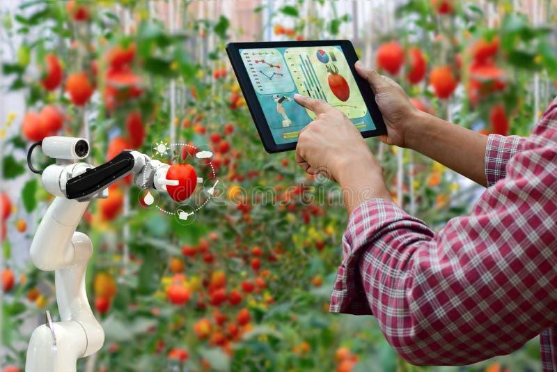 Rolnik trzyma pastylki ręki robota żniwa mądrze pracy rolniczą maszynerię fotografia stock