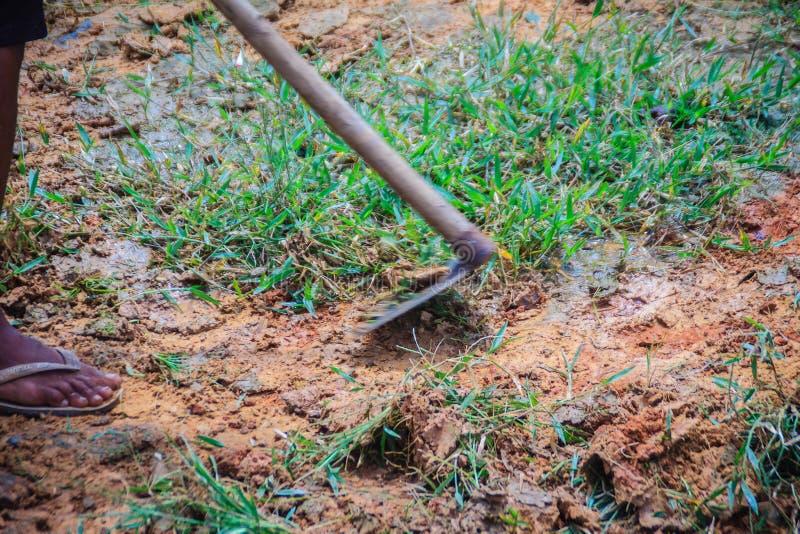 Rolnik używa motykę kosić trawy ja pole Kosić trawy w polu z łopatą Motyka z zielenią przycina trawy fotografia stock
