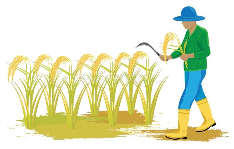 Rolnik w irlandczyka polu royalty ilustracja