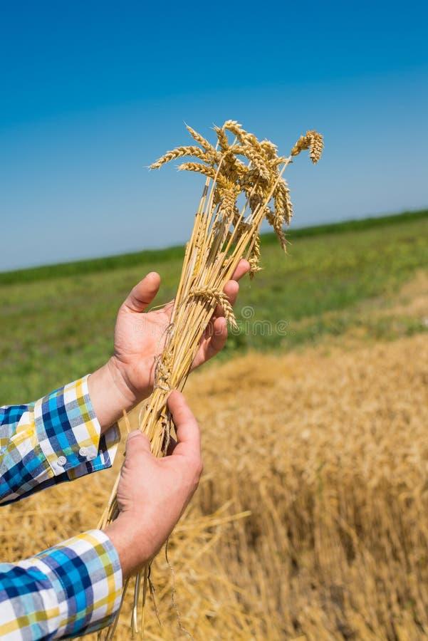 Download Rolnik w polu zdjęcie stock. Obraz złożonej z kontrola - 57662086