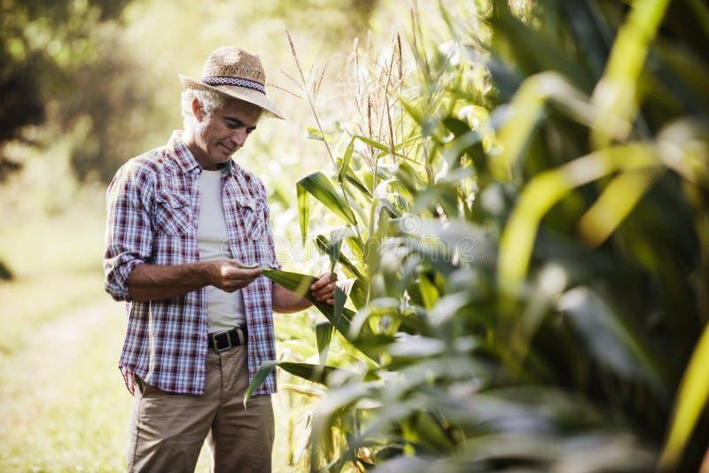 Rolnik w polu obrazy stock
