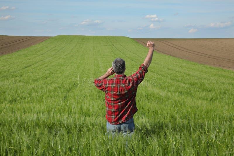 Rolnik w zielonym pszenicznym polu w wio?nie zdjęcie royalty free