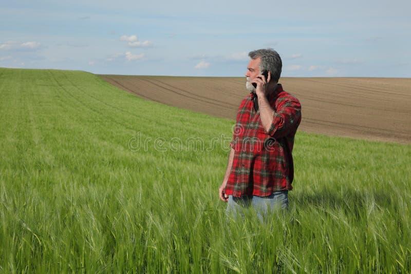 Rolnik w zielonym pszenicznym polu w wio?nie zdjęcia stock