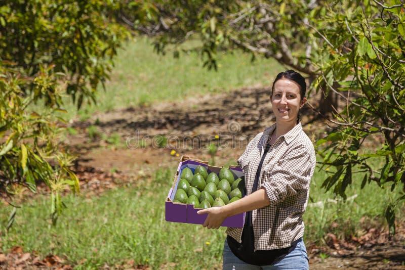 Rolnik z avocados obraz stock