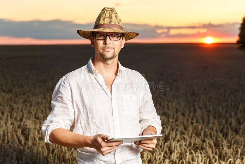 Rolnik z cyfrową pastylki pozycją w pszenicznym polu przed zmierzchem fotografia stock
