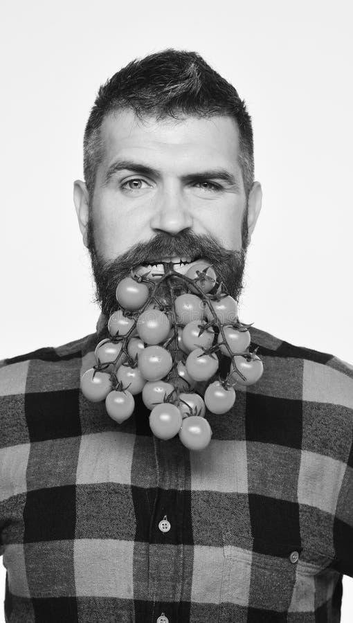 Rolnik z flirty twarzą trzyma wiązkę pomidory w usta obrazy stock