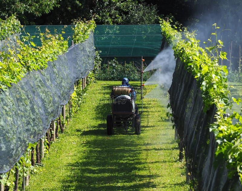 Rolnik z ochronnym kostiumem na rolniczym pojazdzie, rozpyla chemiczną zarazy kontrola na winnicach fotografia stock