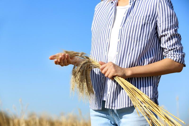 Rolnik z pszenicznymi spikelets przeciw niebieskiemu niebu Zboże zbożowa uprawa fotografia stock