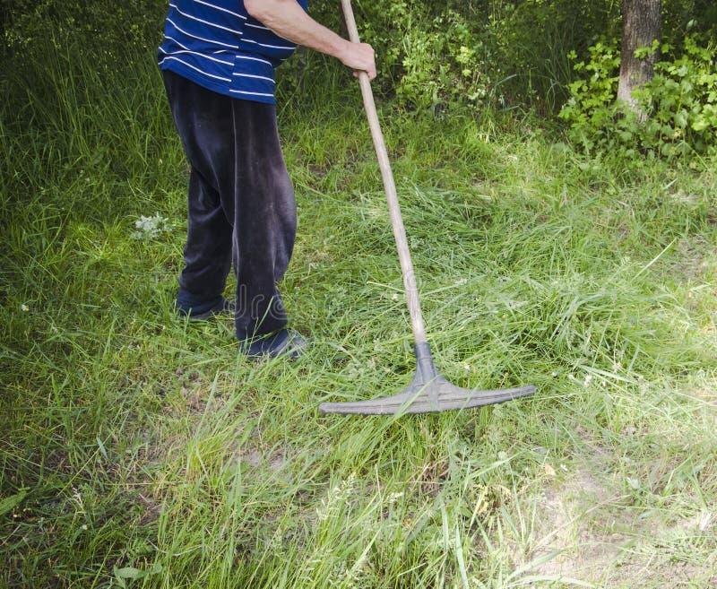 Rolnik zbiera świntuch trawy w wiośnie fotografia stock