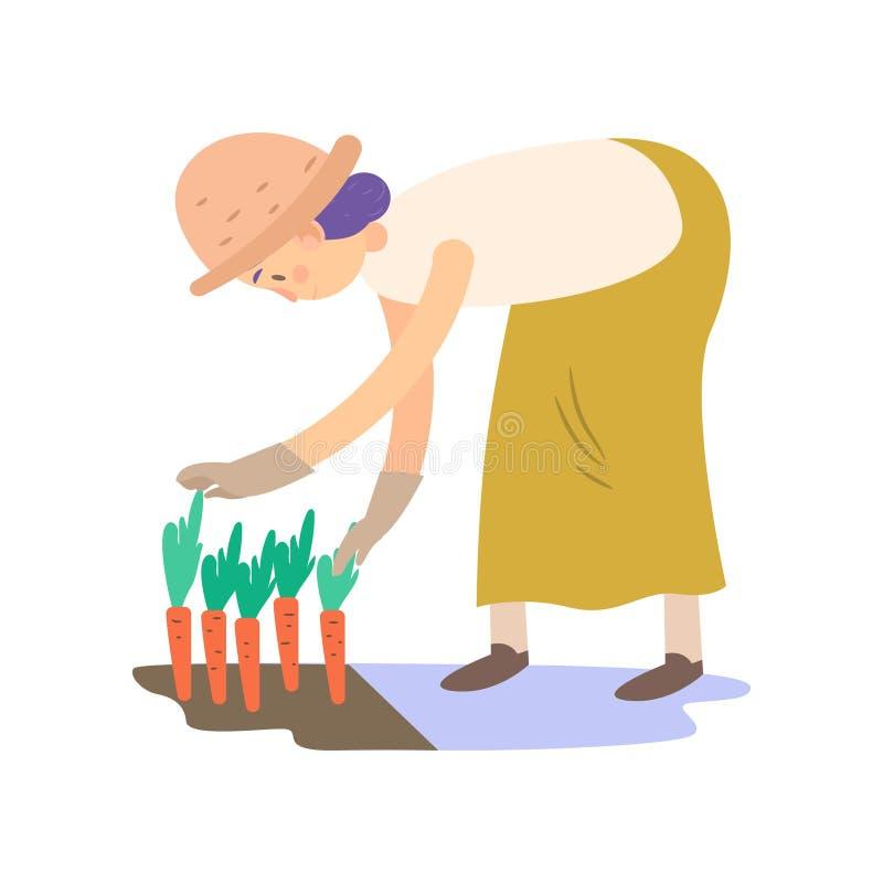 Rolnik zbiera marchewki Wektorowa ilustracja odizolowywająca na biały tle ilustracji