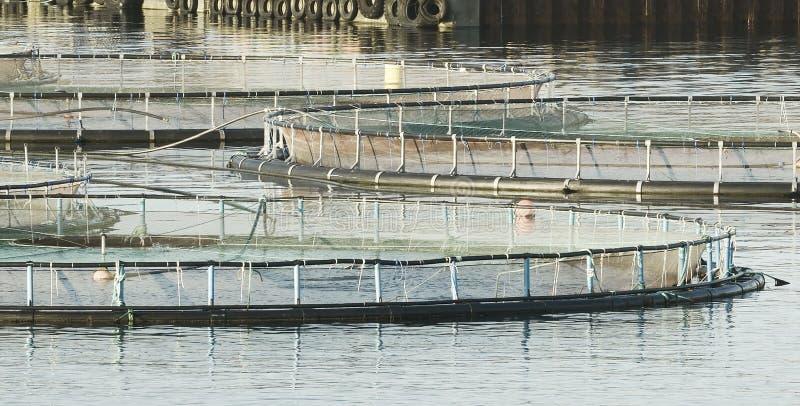 Rolny Łososiowy połów Z klatka systemem W Norwegia obrazy royalty free