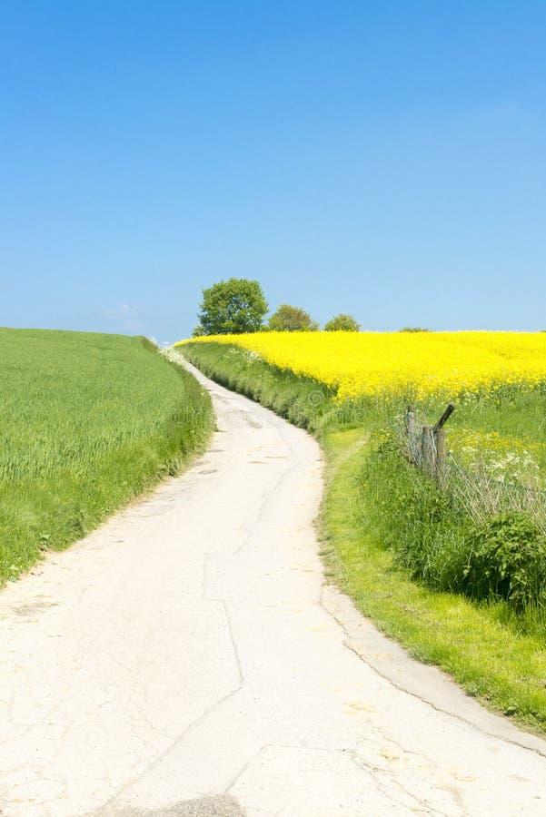 Rolny ślad między żółtym gwałtem i kwitnącymi łąkami fotografia royalty free
