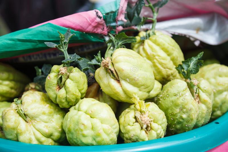 Rolny świeży zielony organicznie warzywo, Momordica charantia, znać jako gorzki melonowy balsam jabłko, balsam bonkreta, gorzki o zdjęcia stock
