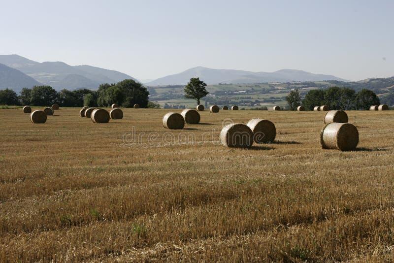 rolny życie zdjęcia stock
