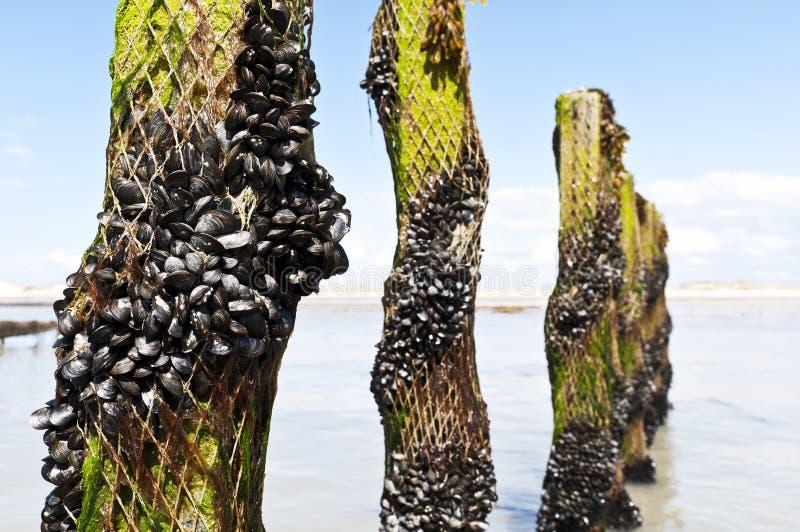 rolny France mussel morze fotografia royalty free