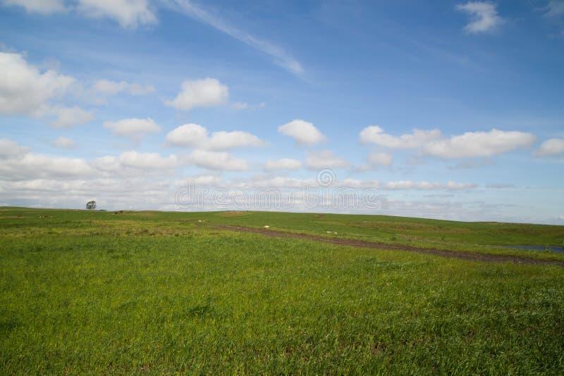 Rolny horyzont obrazy royalty free