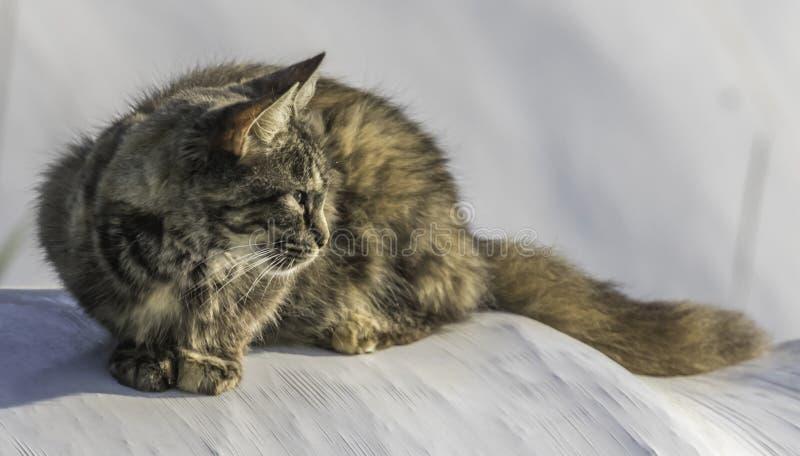 Rolny kot na siano beli szczegółowo zdjęcie royalty free